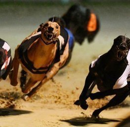 How To Bet On The Greyhounds